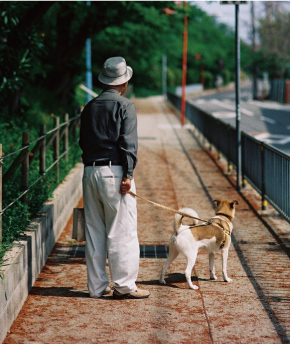 高齢愛犬家