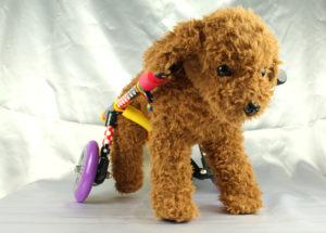 犬用車椅子2