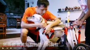 中国的狗轮椅车