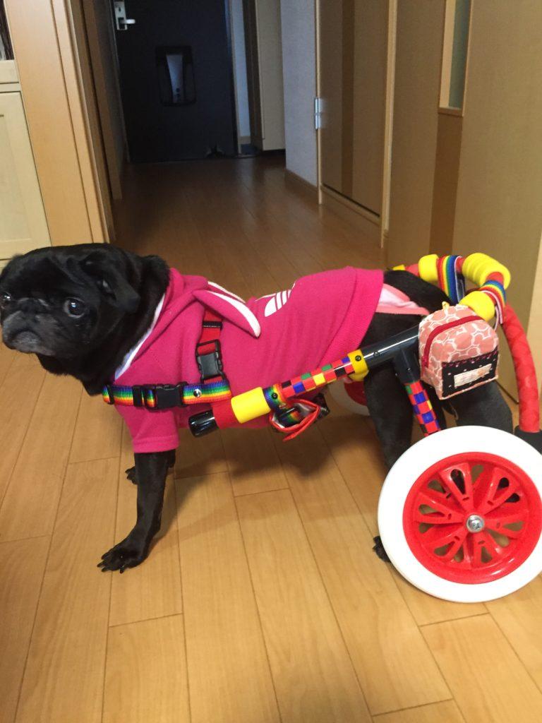 犬用車椅子-パグ