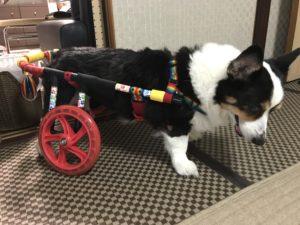 犬の車椅子 コーギー