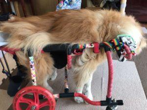 もこちゃんの車椅子
