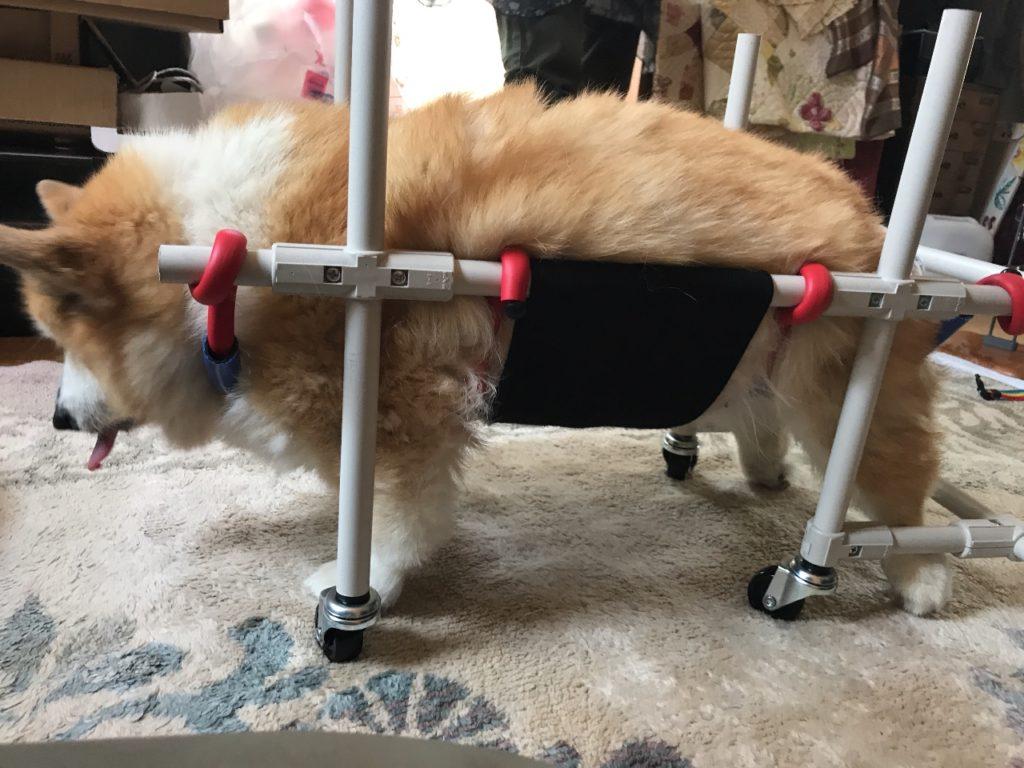 ももちゃんの車椅子