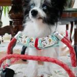 犬の車椅子#48