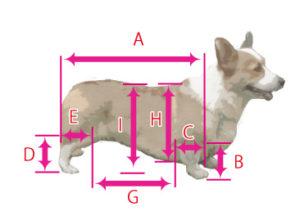 犬の車椅子の測定法01