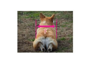 犬の車椅子の測定法02