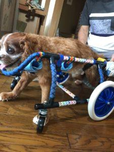 ルピー君の車椅子