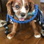 犬の車椅子#50