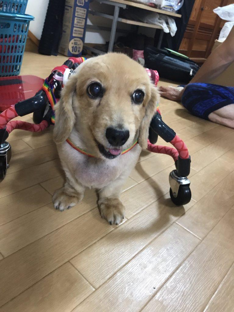 ひめちゃんの車椅子