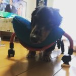 犬の車椅子#52