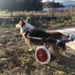 犬の車椅子#54