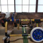 犬の車椅子#59