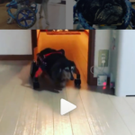 "<span class=""title"">犬の車椅子#63</span>"