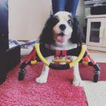 "<span class=""title"">犬の車椅子#61</span>"